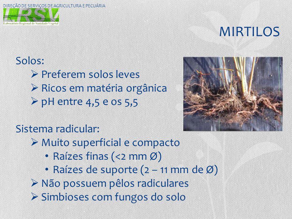 MIRTILOS Solos: Preferem solos leves Ricos em matéria orgânica
