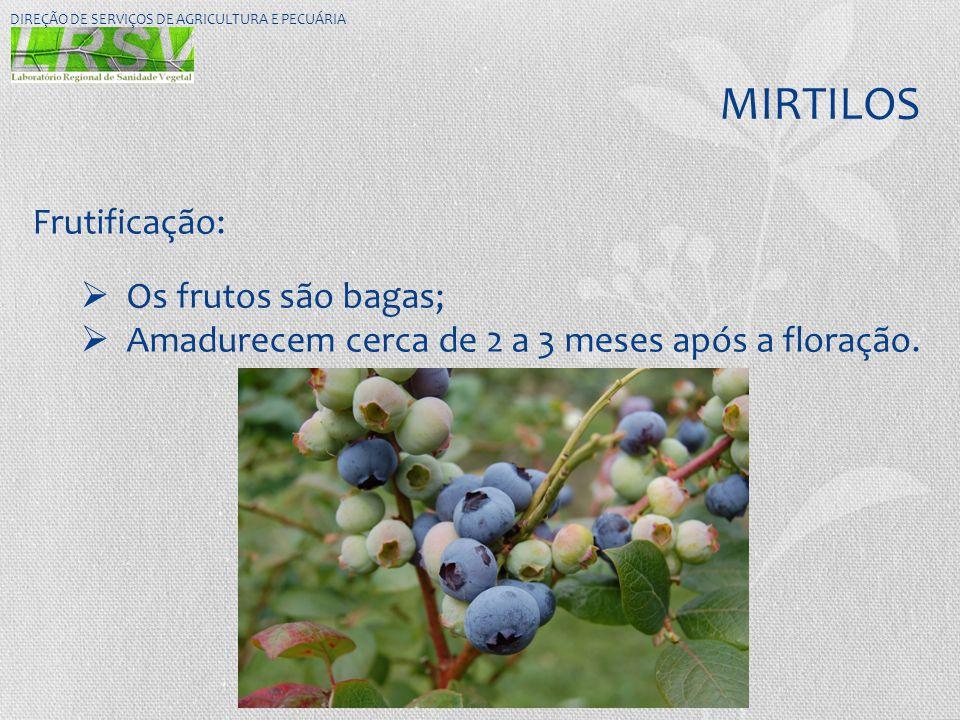 MIRTILOS Frutificação: Os frutos são bagas;