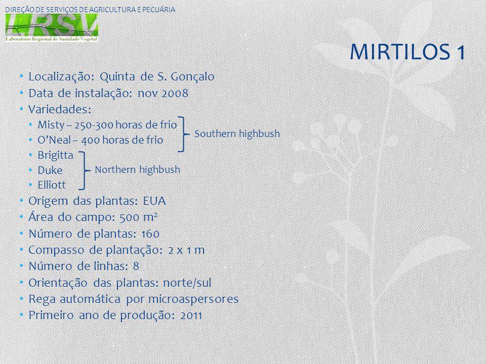 MIRTILOS 1 Localização: Quinta de S. Gonçalo