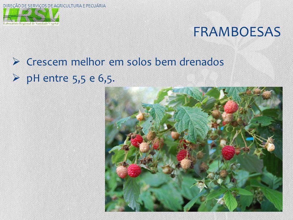 FRAMBOESAS Crescem melhor em solos bem drenados pH entre 5,5 e 6,5.