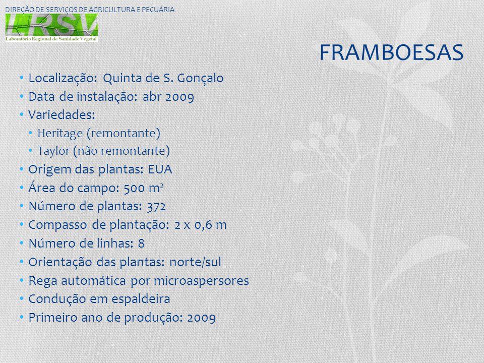 FRAMBOESAS Localização: Quinta de S. Gonçalo