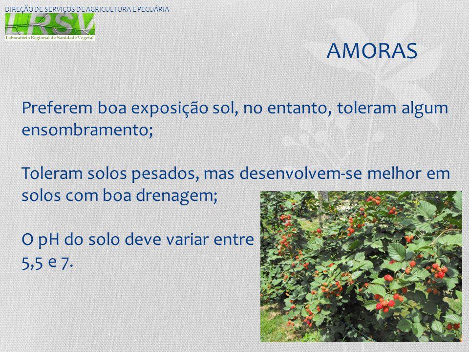DIREÇÃO DE SERVIÇOS DE AGRICULTURA E PECUÁRIA
