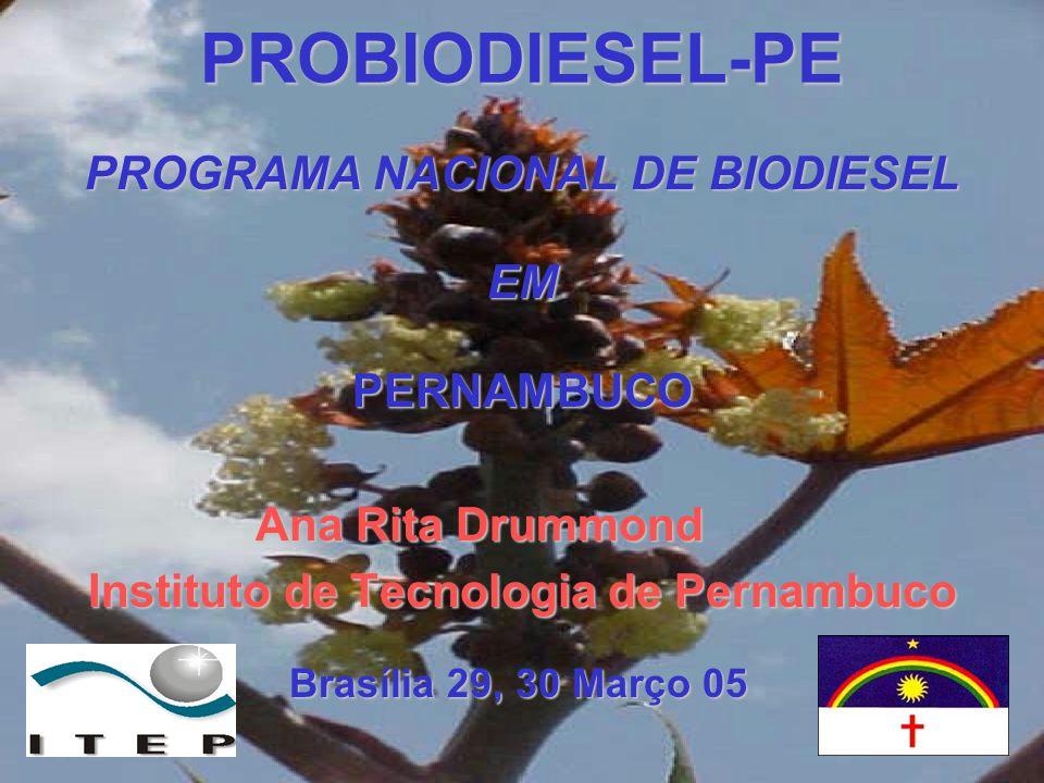 PROGRAMA NACIONAL DE BIODIESEL Instituto de Tecnologia de Pernambuco