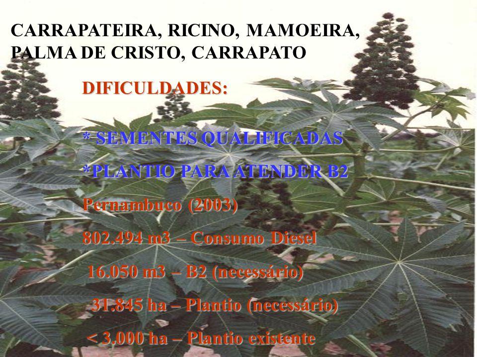 CARRAPATEIRA, RICINO, MAMOEIRA, PALMA DE CRISTO, CARRAPATO