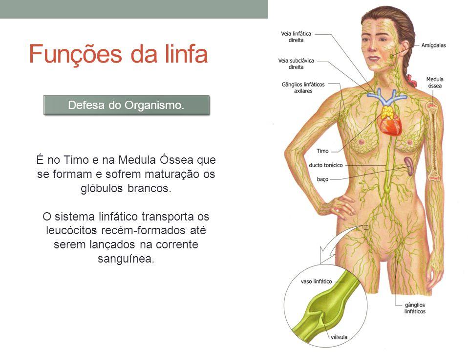 Funções da linfa Defesa do Organismo.