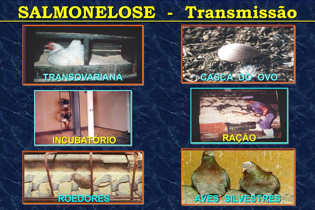 SALMONELOSE - Transmissão