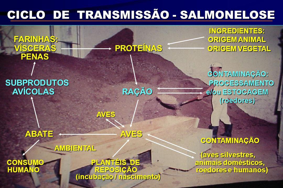 CICLO DE TRANSMISSÃO - SALMONELOSE