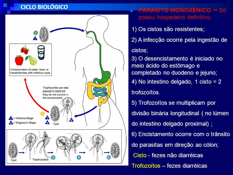 CICLO BIOLÓGICO PARASITO MONOXÊNICO  Só possui hospedeiro definitivo.