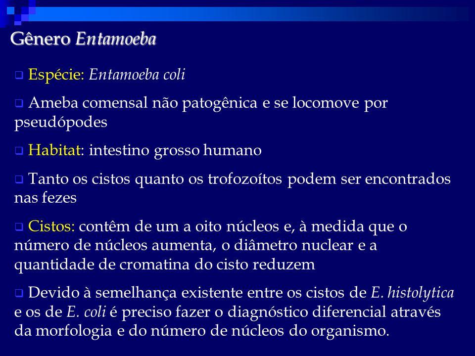 Gênero Entamoeba Espécie: Entamoeba coli