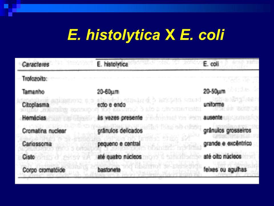 E. histolytica X E. coli