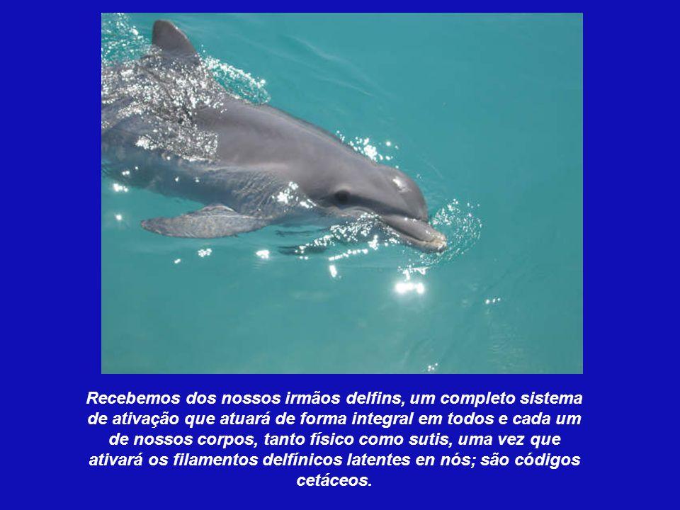 Recebemos dos nossos irmãos delfins, um completo sistema de ativação que atuará de forma integral em todos e cada um de nossos corpos, tanto físico como sutis, uma vez que ativará os filamentos delfínicos latentes en nós; são códigos cetáceos.