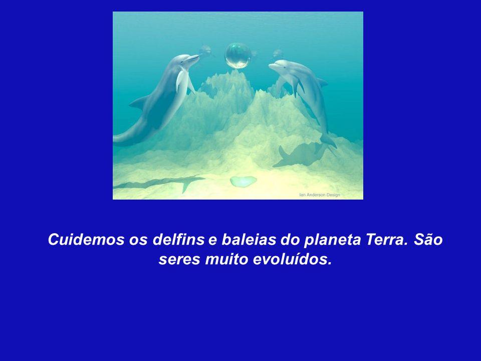 Cuidemos os delfins e baleias do planeta Terra