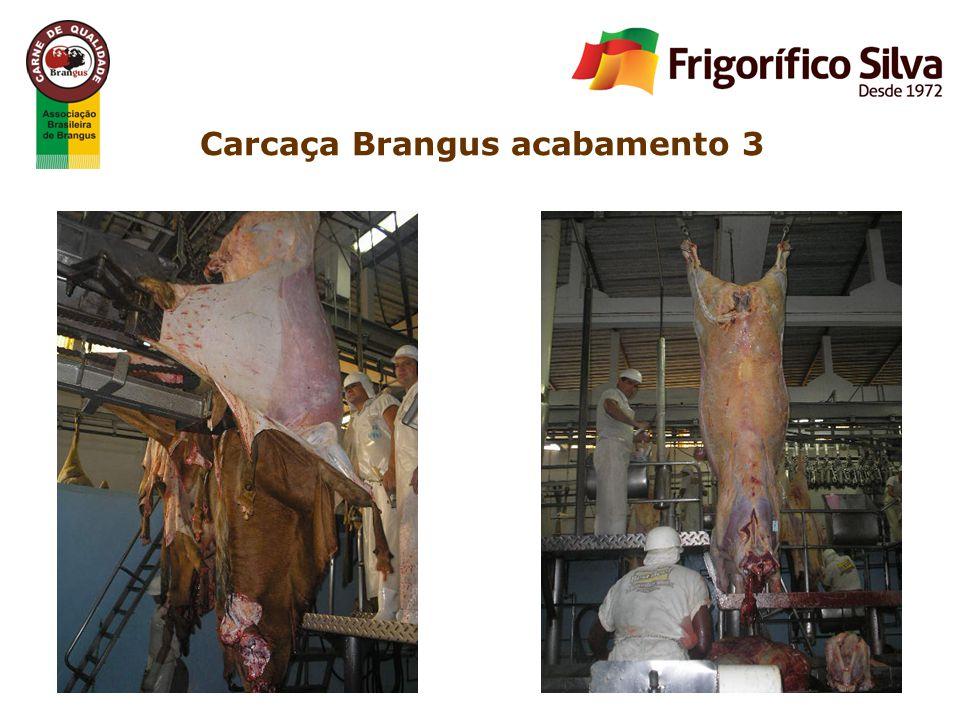 Carcaça Brangus acabamento 3