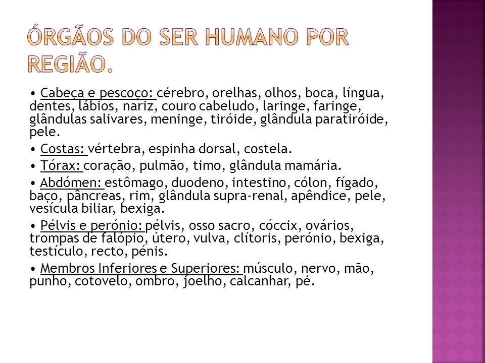 Órgãos do ser humano por região.