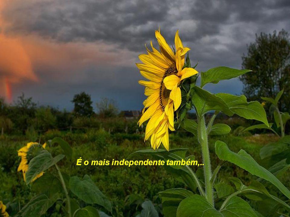 É o mais independente também,..
