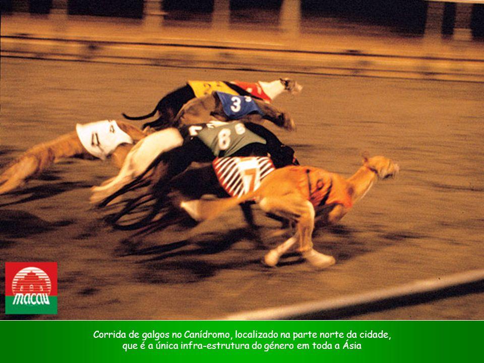 Corrida de galgos no Canídromo, localizado na parte norte da cidade,