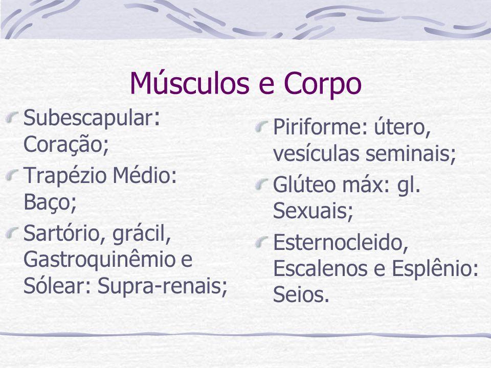 Músculos e Corpo Subescapular: Coração;