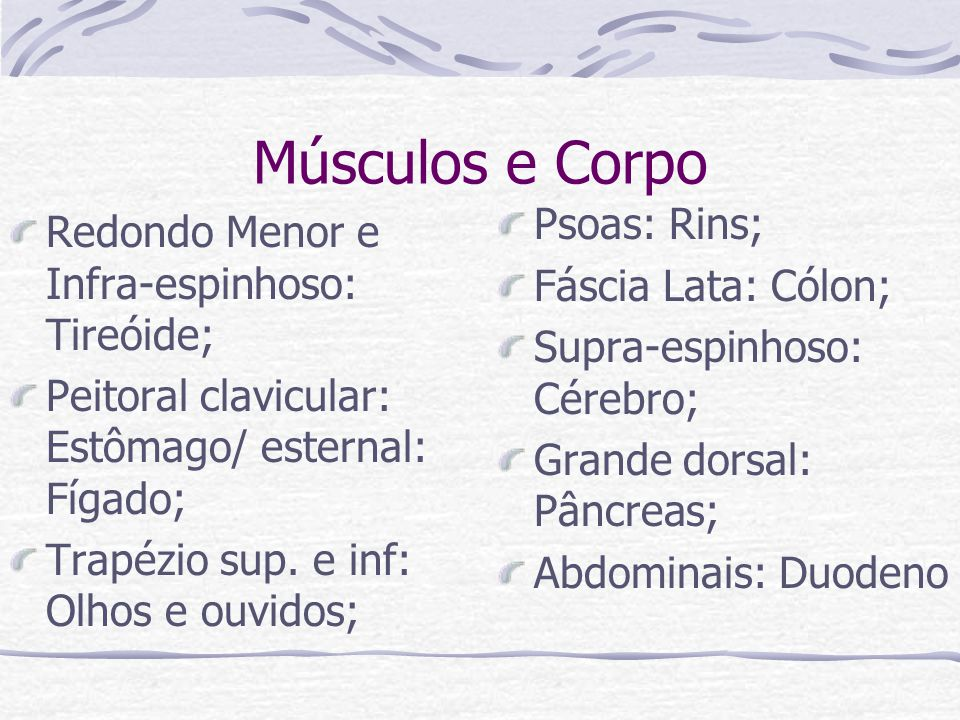 Músculos e Corpo Psoas: Rins;