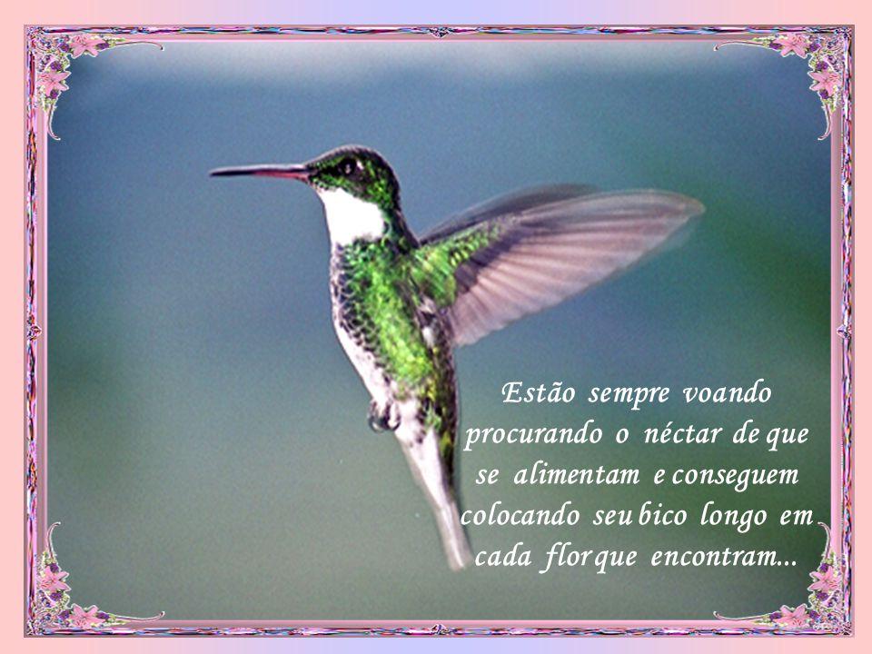 Estão sempre voando procurando o néctar de que se alimentam e conseguem colocando seu bico longo em cada flor que encontram...