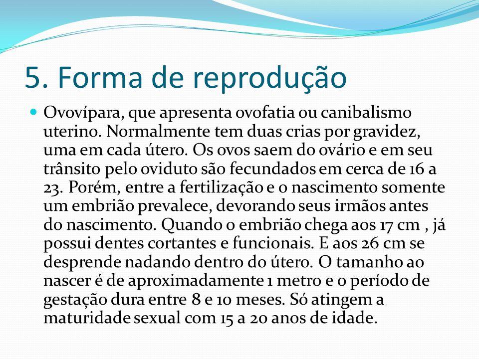 5. Forma de reprodução