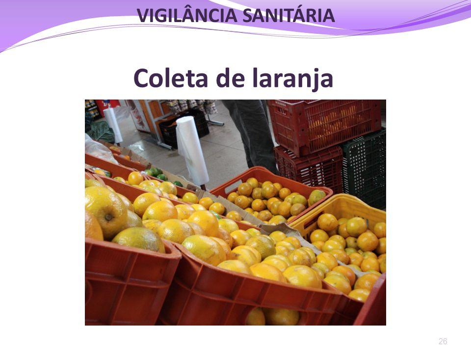 VIGILÂNCIA SANITÁRIA Coleta de laranja