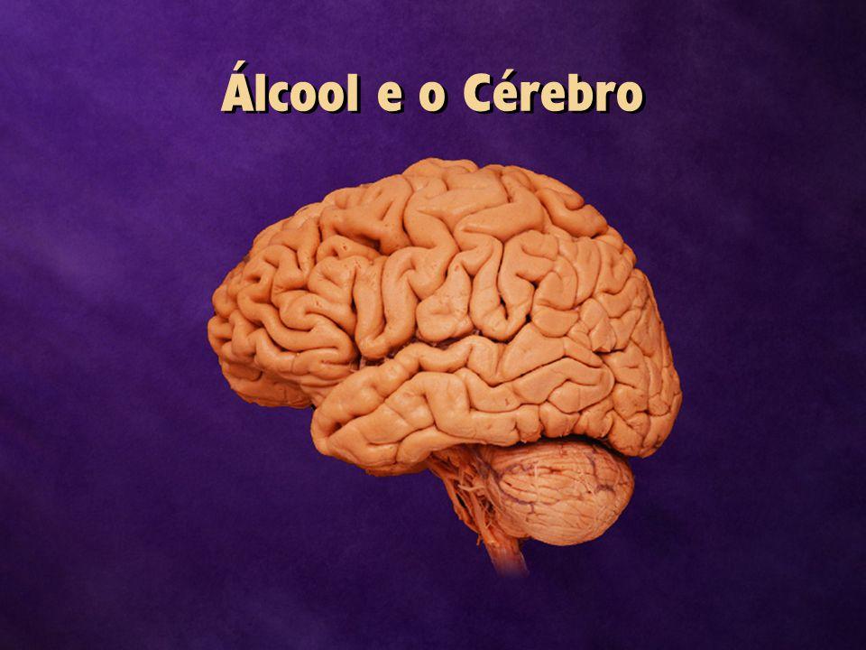 Álcool e o Cérebro
