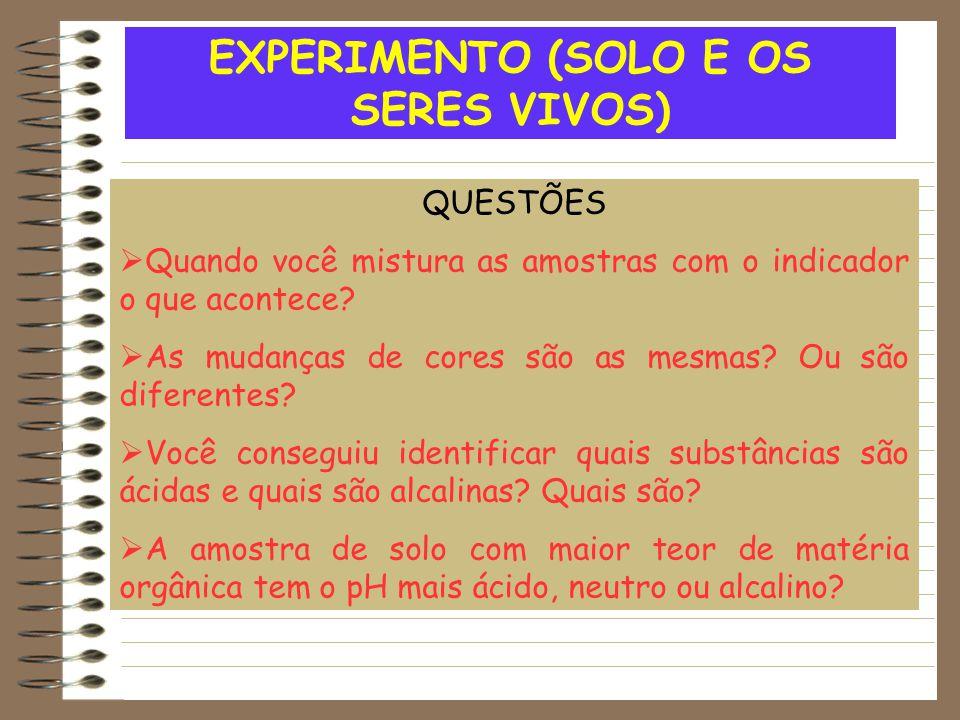 EXPERIMENTO (SOLO E OS SERES VIVOS)