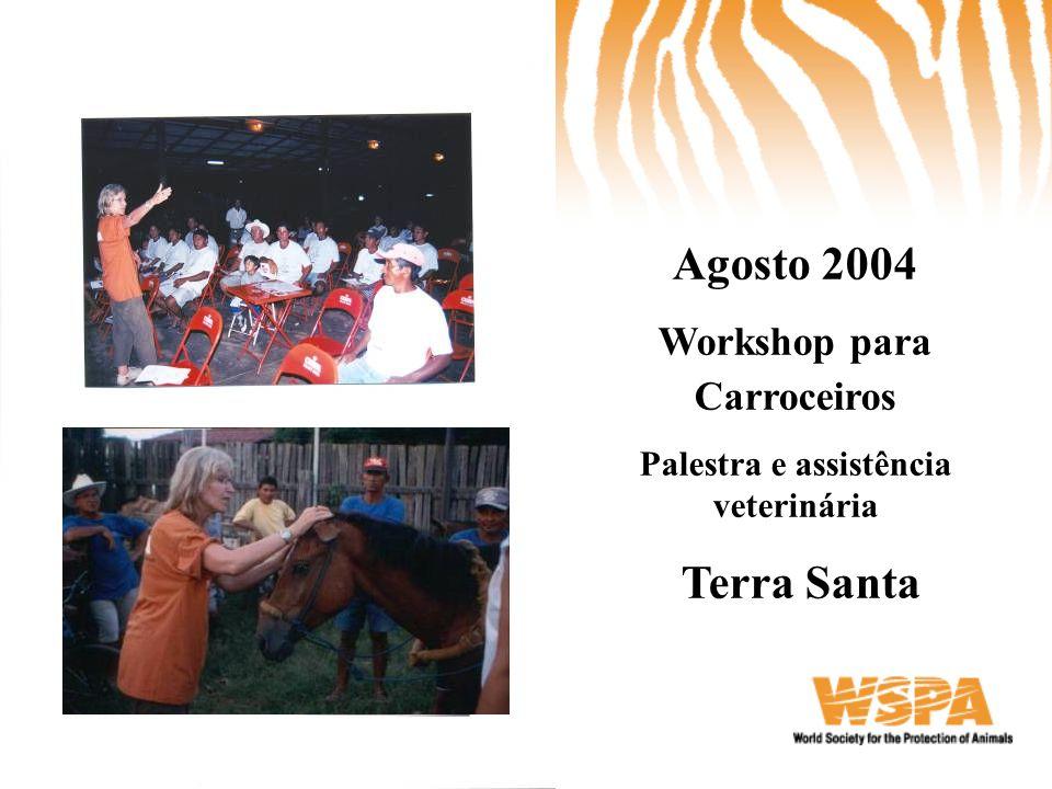 Workshop para Carroceiros Palestra e assistência veterinária
