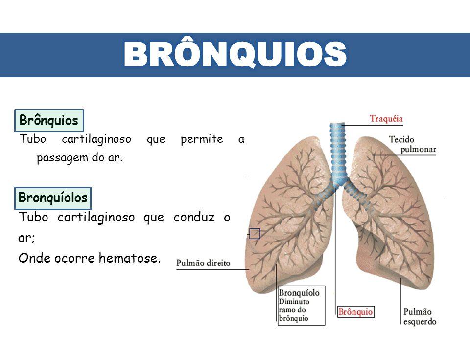 BRÔNQUIOS Brônquios Bronquíolos Tubo cartilaginoso que conduz o ar;