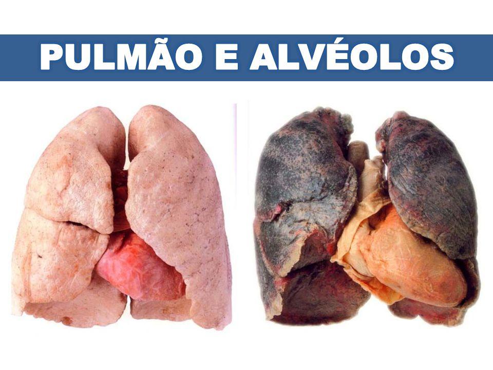 PULMÃO E ALVÉOLOS