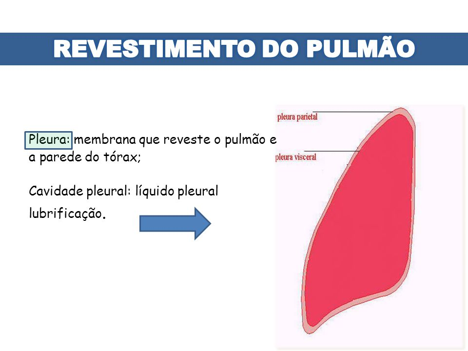 REVESTIMENTO DO PULMÃO
