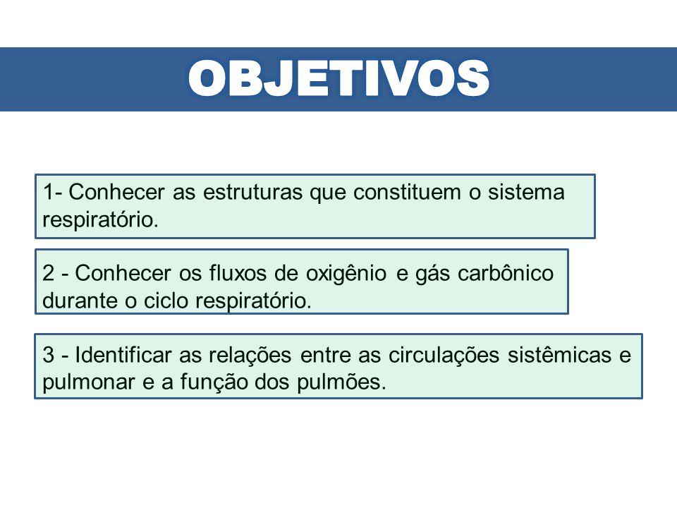 OBJETIVOS 1- Conhecer as estruturas que constituem o sistema respiratório.