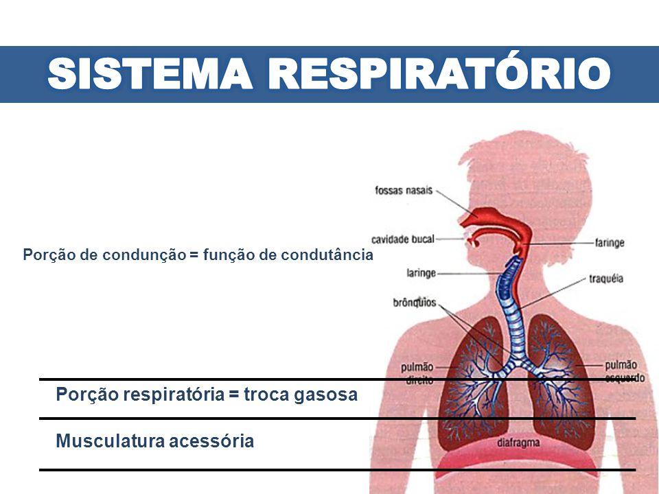 SISTEMA RESPIRATÓRIO Porção respiratória = troca gasosa