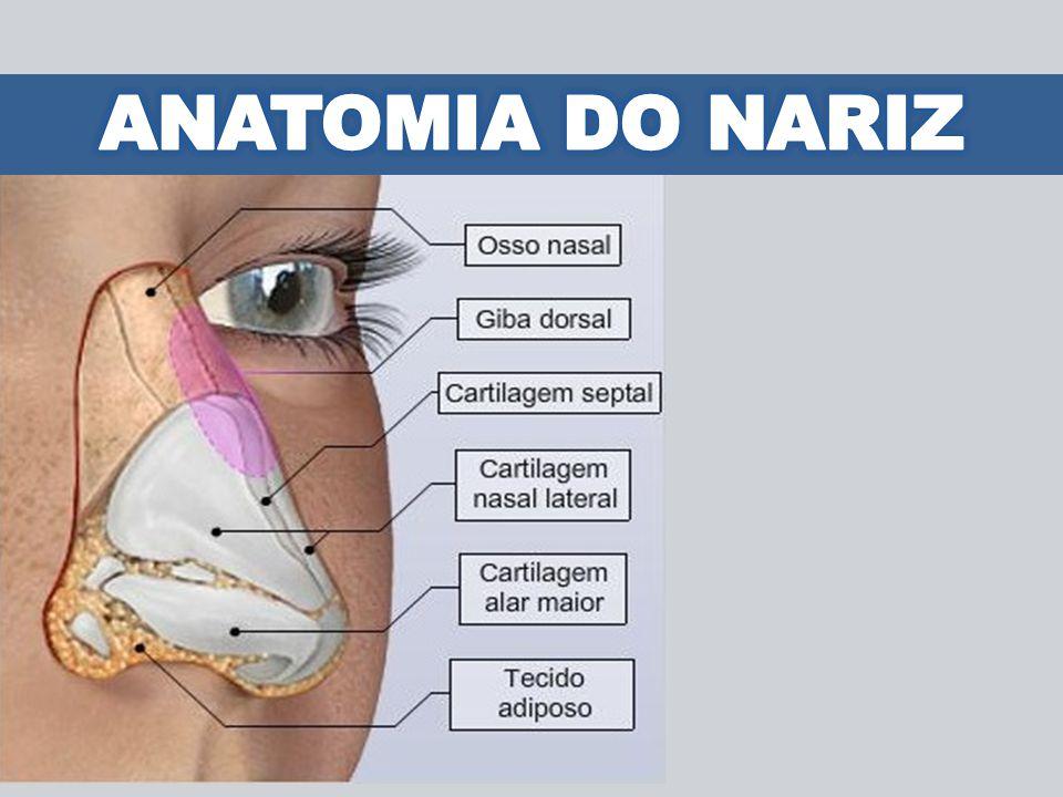 ANATOMIA DO NARIZ
