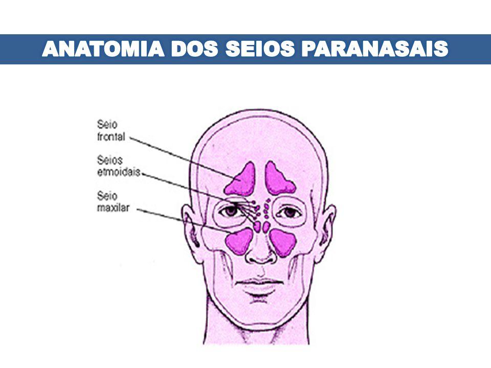ANATOMIA DOS SEIOS PARANASAIS