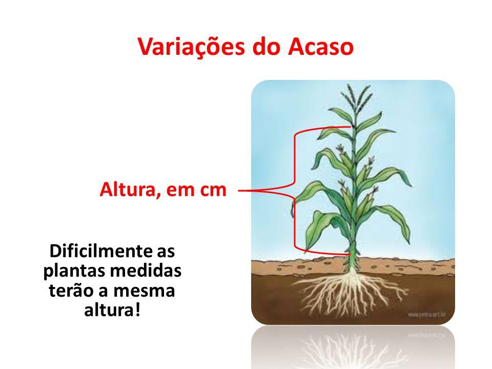 Dificilmente as plantas medidas terão a mesma altura!