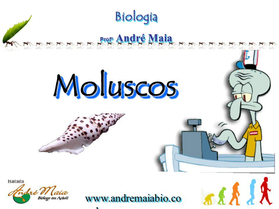 Biologia Profº André Maia Moluscos