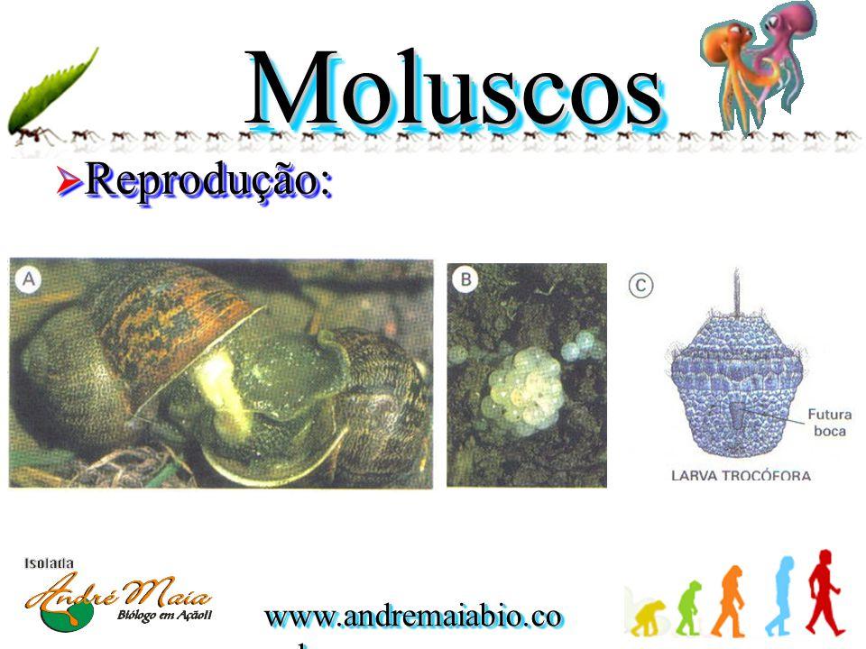 Moluscos Reprodução:
