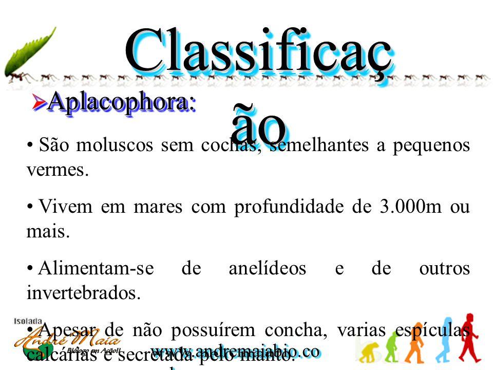 Classificação Aplacophora: