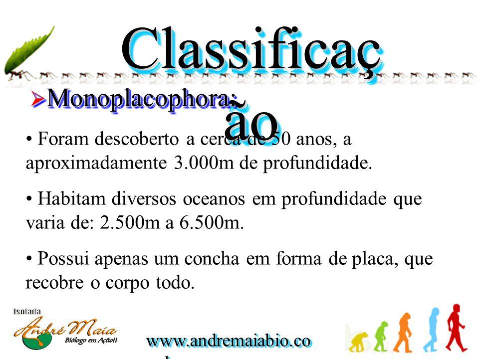 Classificação Monoplacophora: