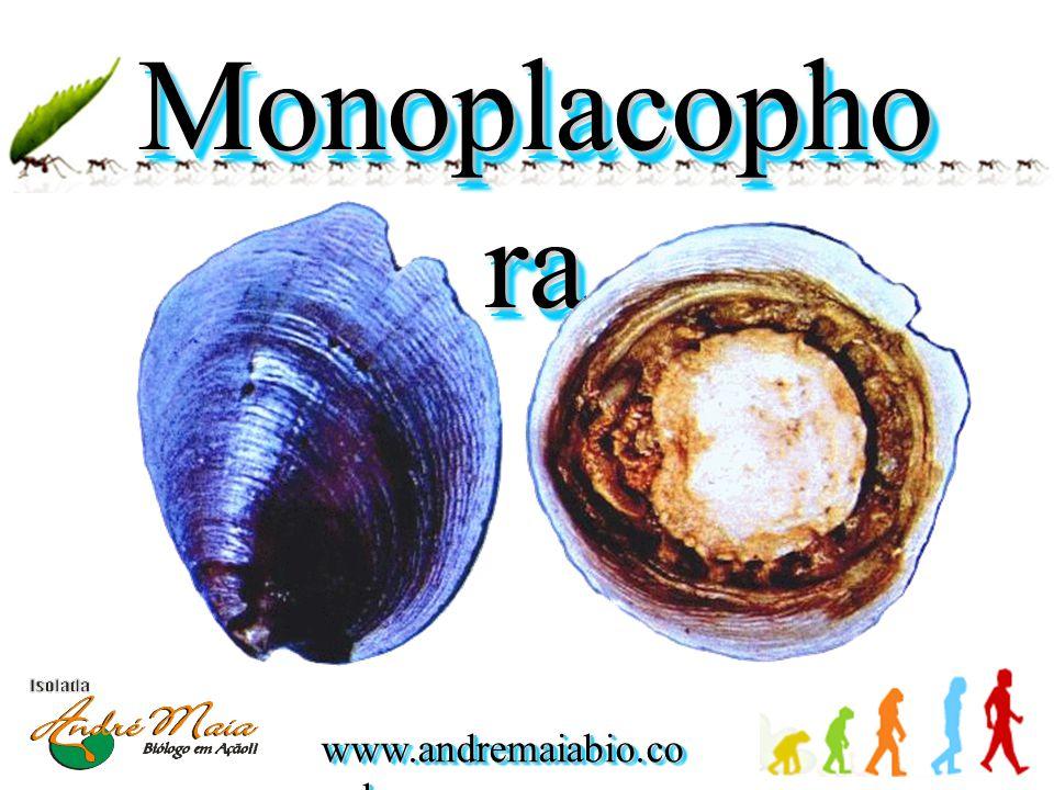 Monoplacophora