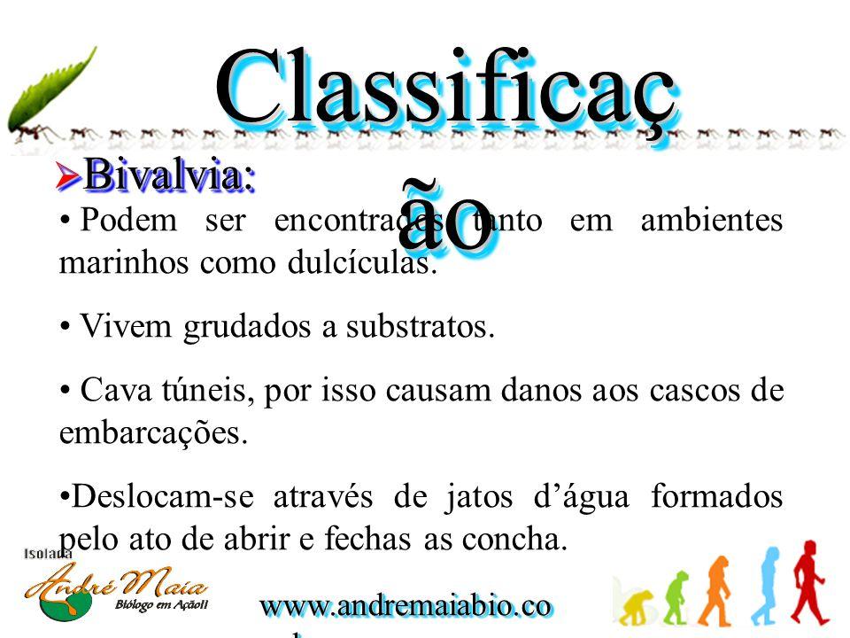 Classificação Bivalvia: