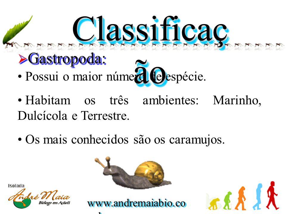 Classificação Gastropoda: Possui o maior número de espécie.