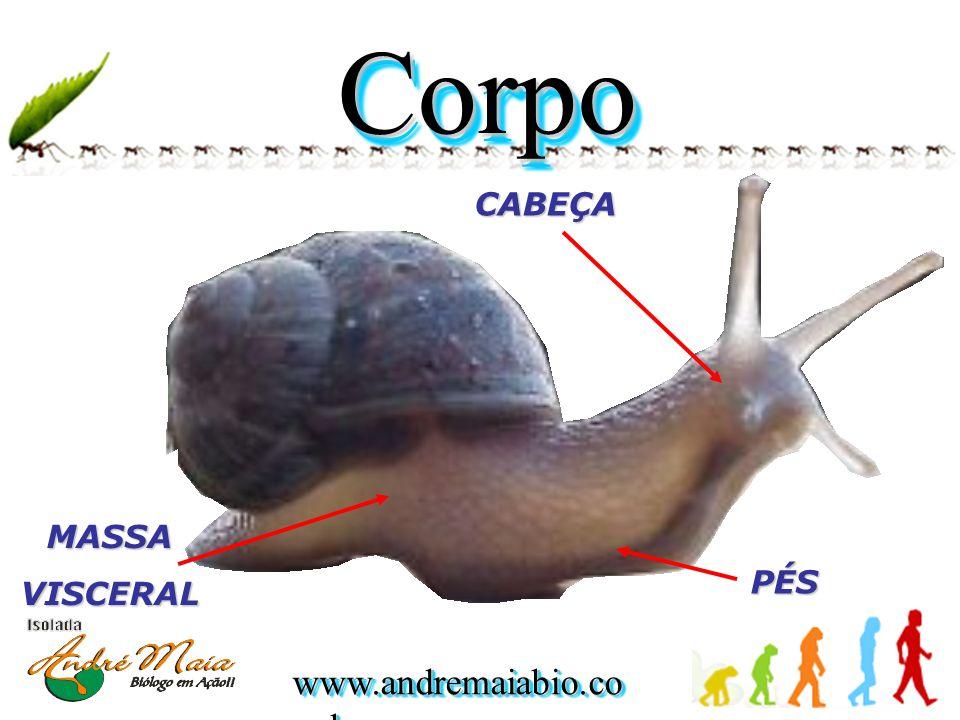 Corpo CABEÇA MASSA VISCERAL PÉS