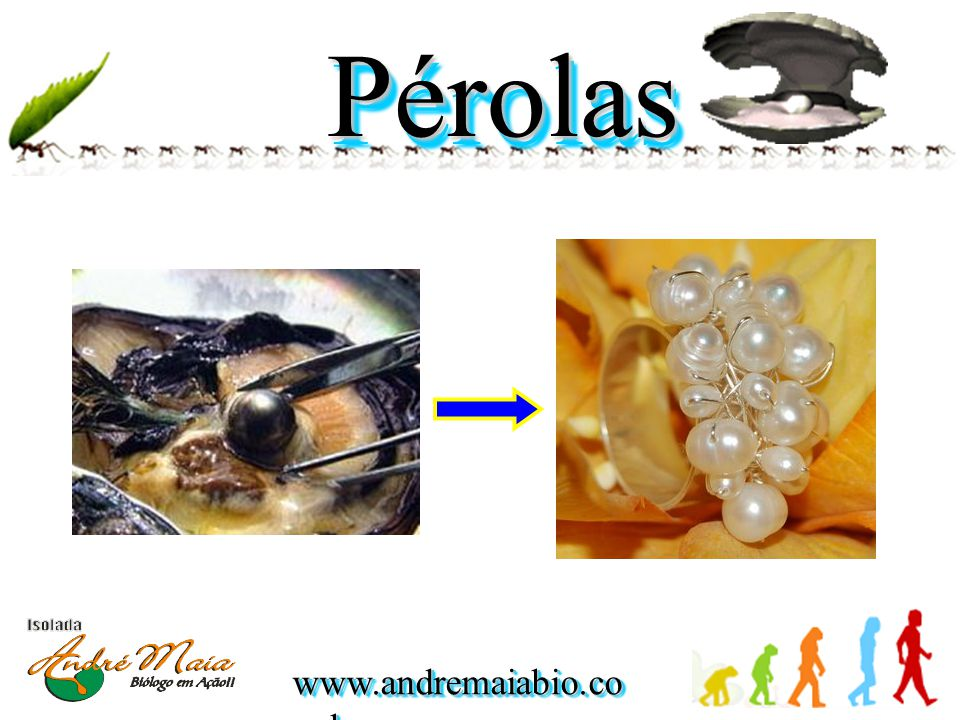 Pérolas