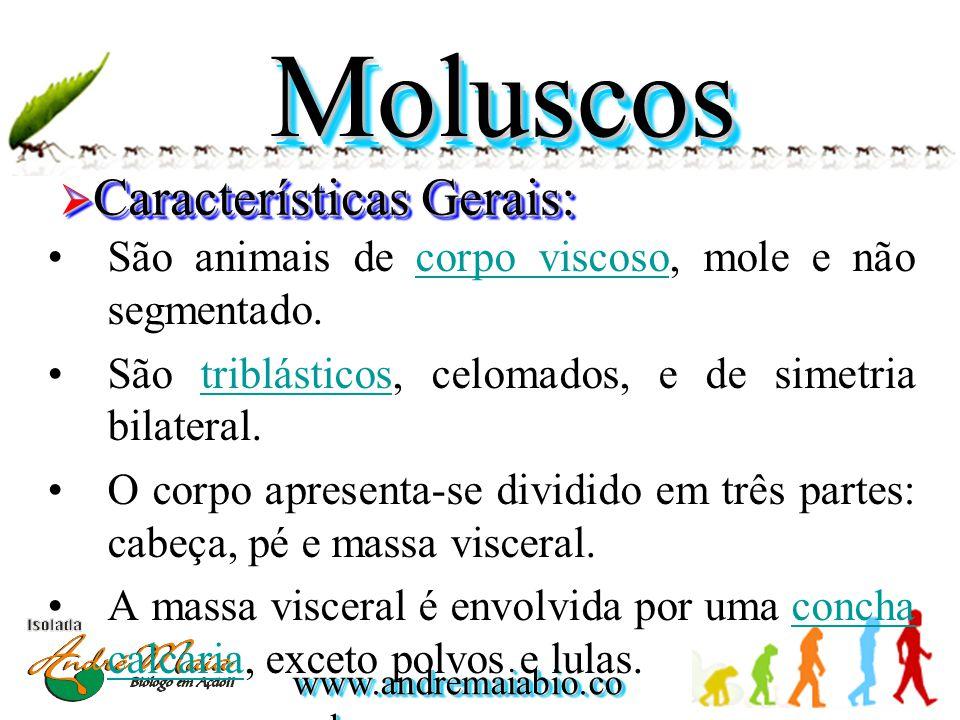 Moluscos Características Gerais: