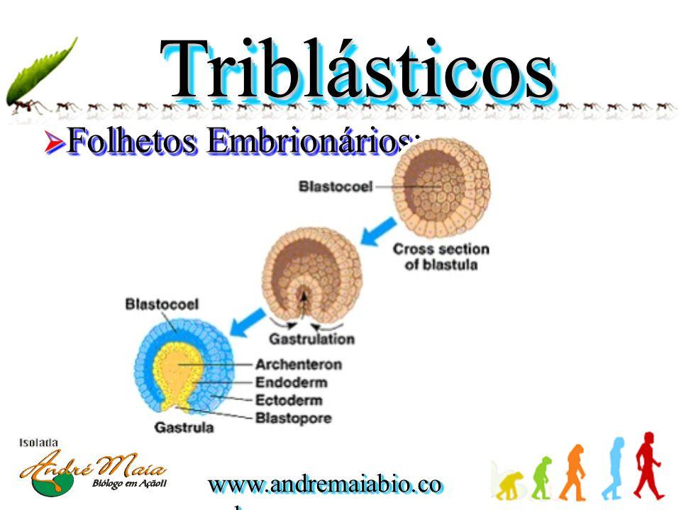 Triblásticos Folhetos Embrionários: