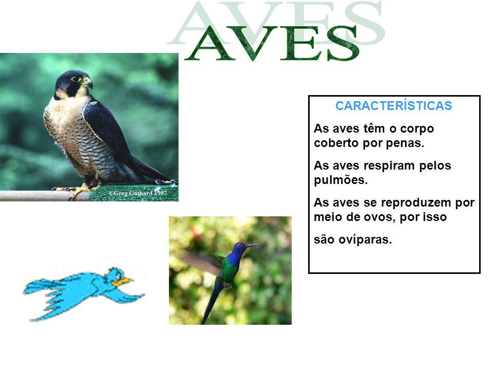 AVES CARACTERÍSTICAS As aves têm o corpo coberto por penas.
