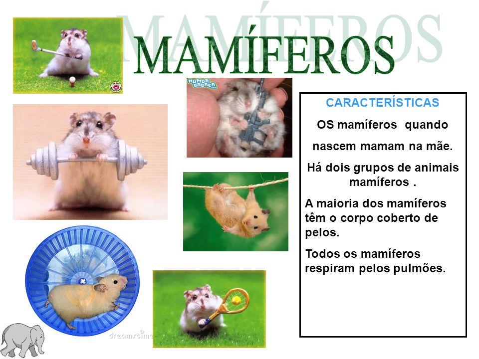 Há dois grupos de animais mamíferos .