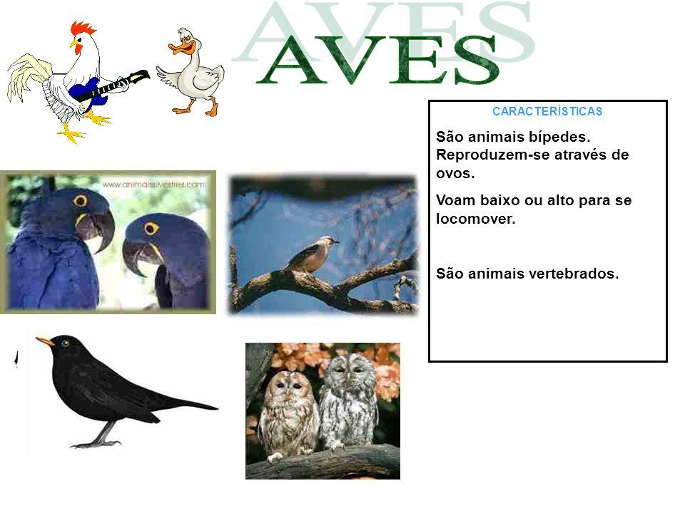 AVES São animais bípedes. Reproduzem-se através de ovos.